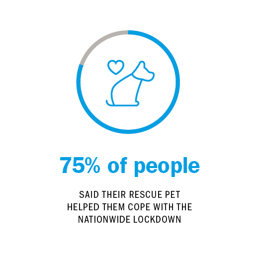 75% of people SAID THEIR RESCUE PET HELPED THEM COPE WITH THE NATIONWIDE LOCKDOWN