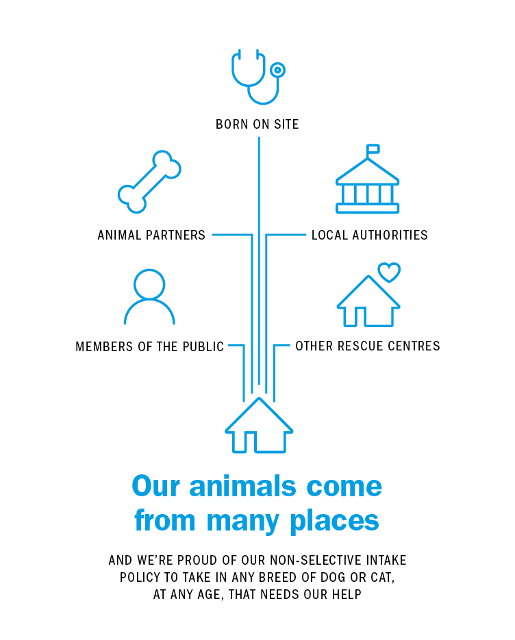 Our animals come from many places AND WE'RE PROUD OF OUR NON-SELECTIVE INTAKE POLICY TO TAKE IN ANY BREED OF DOG OR CAT, AT ANY AGE, THAT NEEDS OUR HELP. Born on site, Animal partners, local authorities, members of the public and other rescue centres.