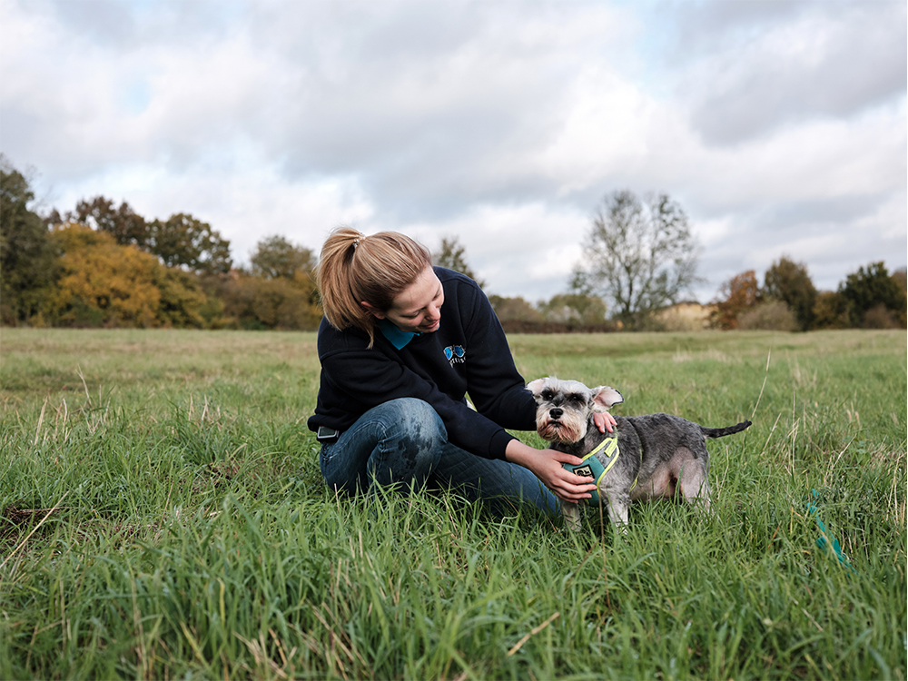 Battersea staff with dog