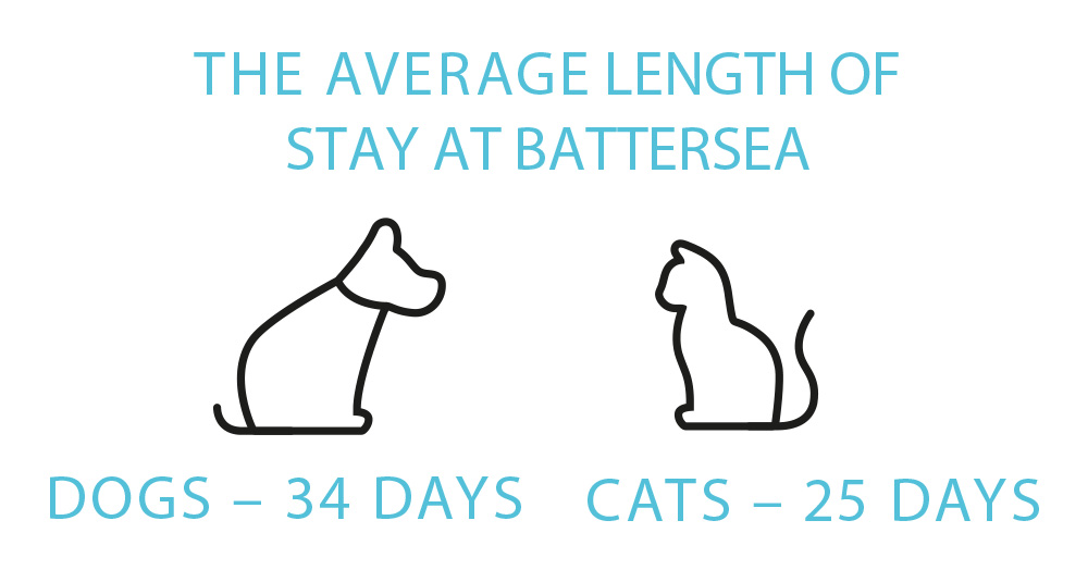 Average Stay Infographic