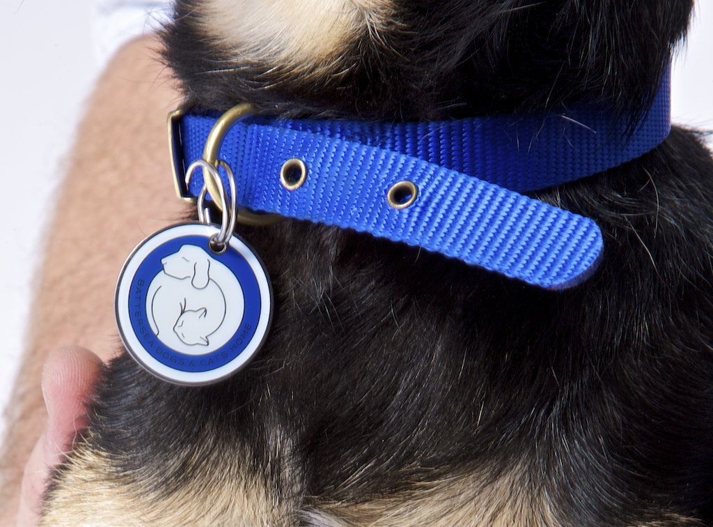 Battersea Dogs & Cats Home Pet Collar