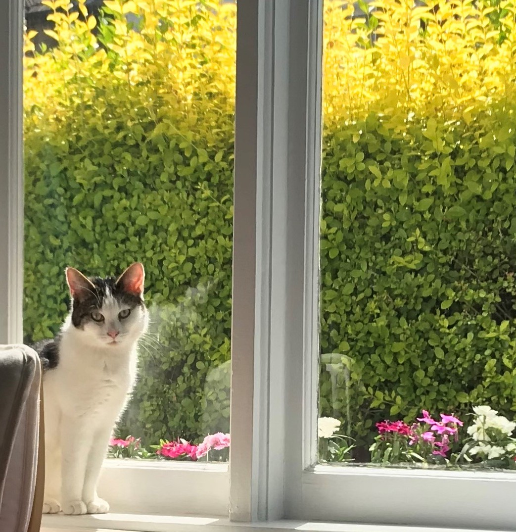 Gertie the cat sitting on window sill