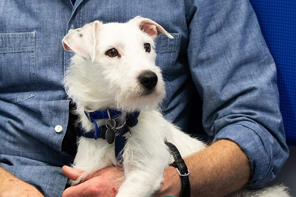 Traumatised Dog Plucked From The Thames Finds His Feet At Battersea Battersea Dogs Cats Home