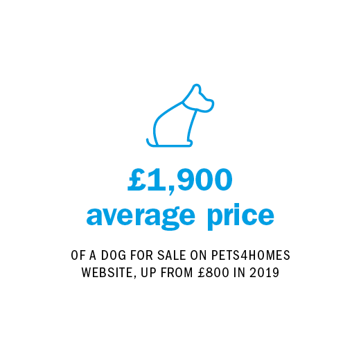 £1,900 average price OF A DOG FOR SALE ON PETS4HOMES WEBSITE, UP FROM £800 IN 2019