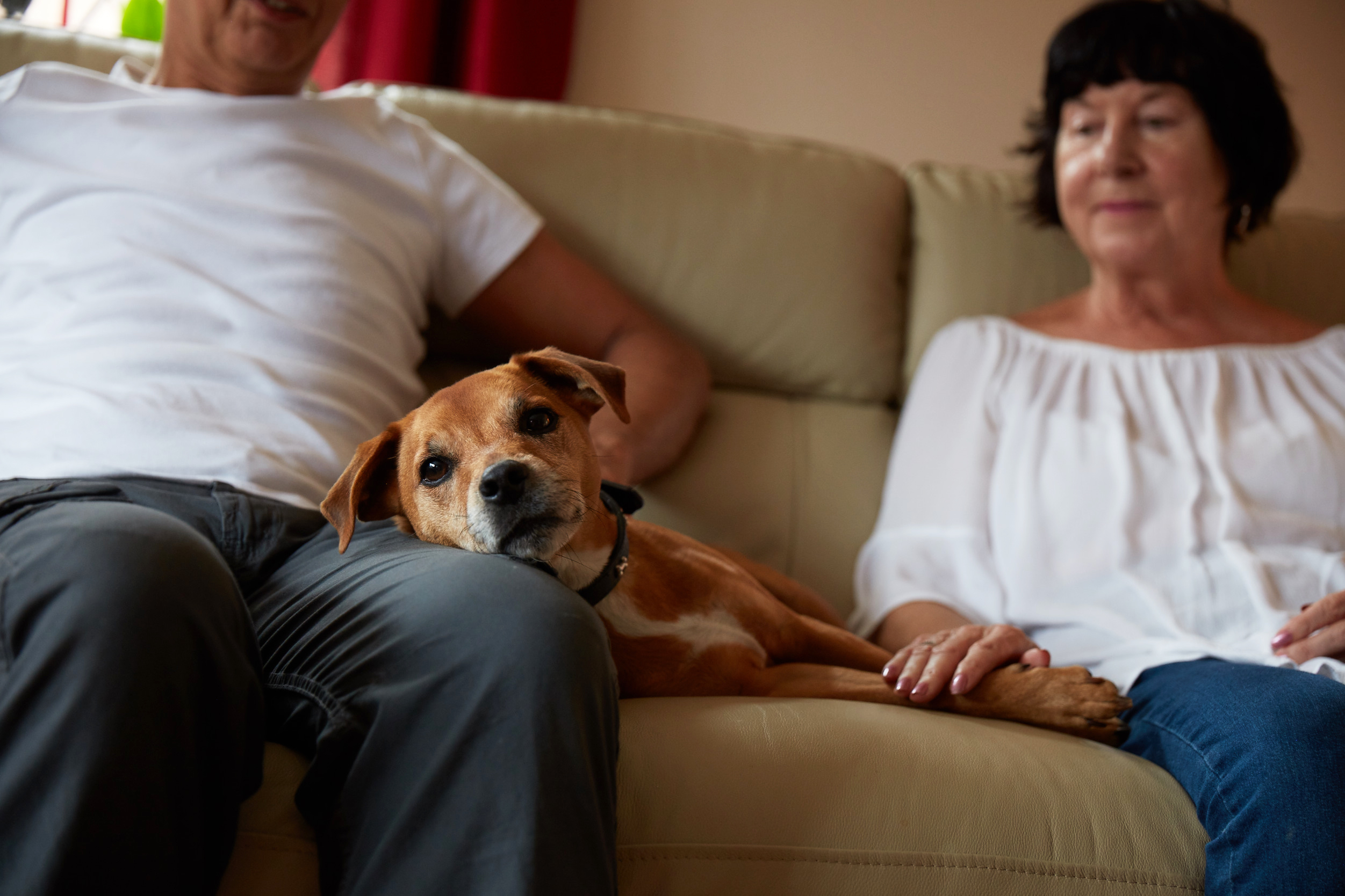 Rehoming a dog