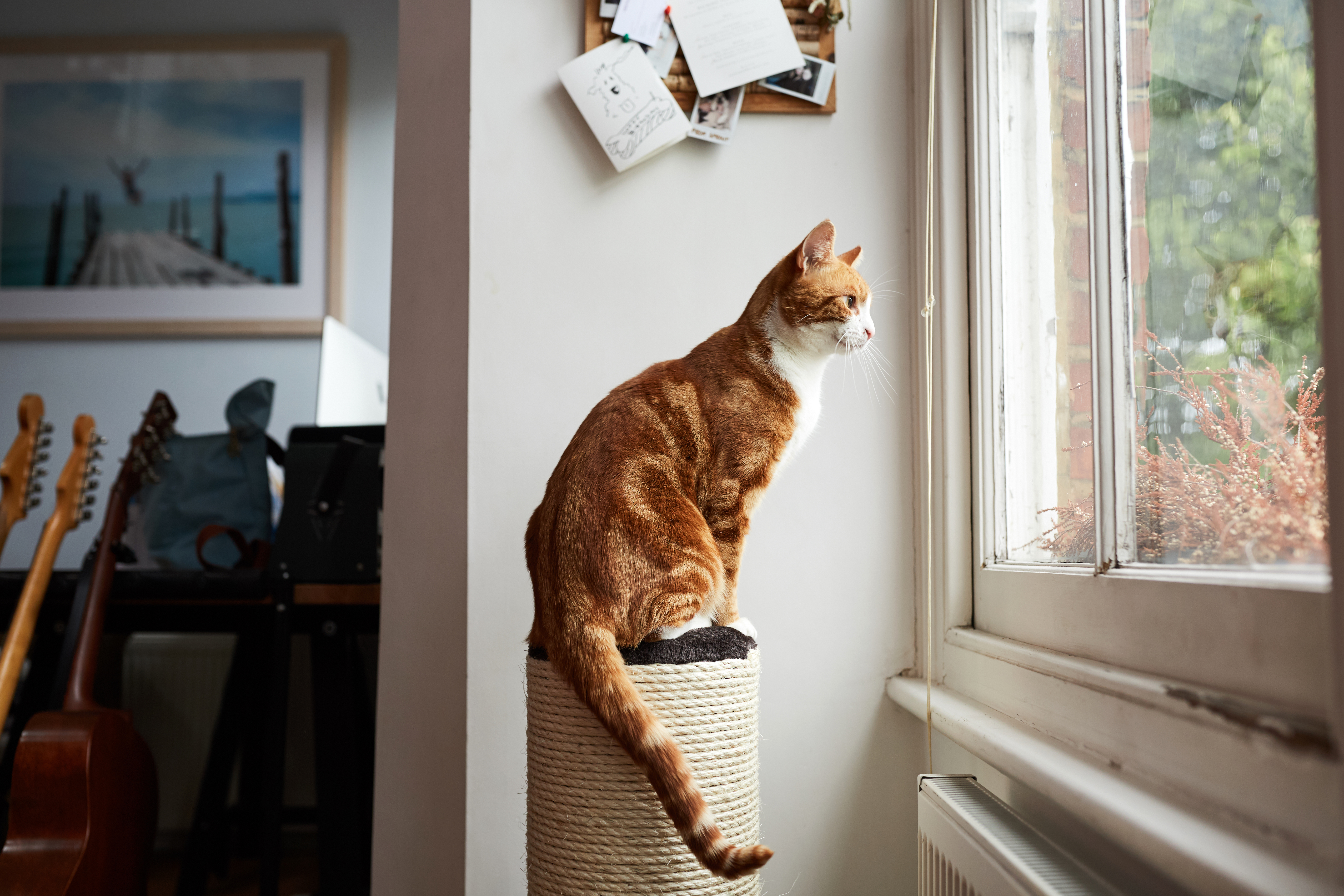 Your cat's aggression may have been triggered by them seeing strange cat through the window
