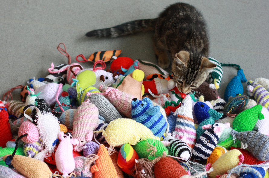 You can help Battersea by donating knitted items.