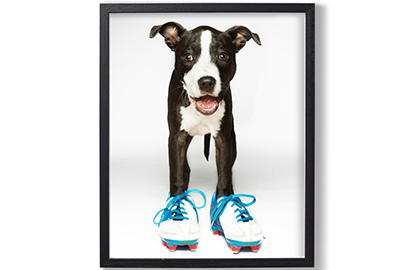 Rankin print Battersea Dogs & Cats Home