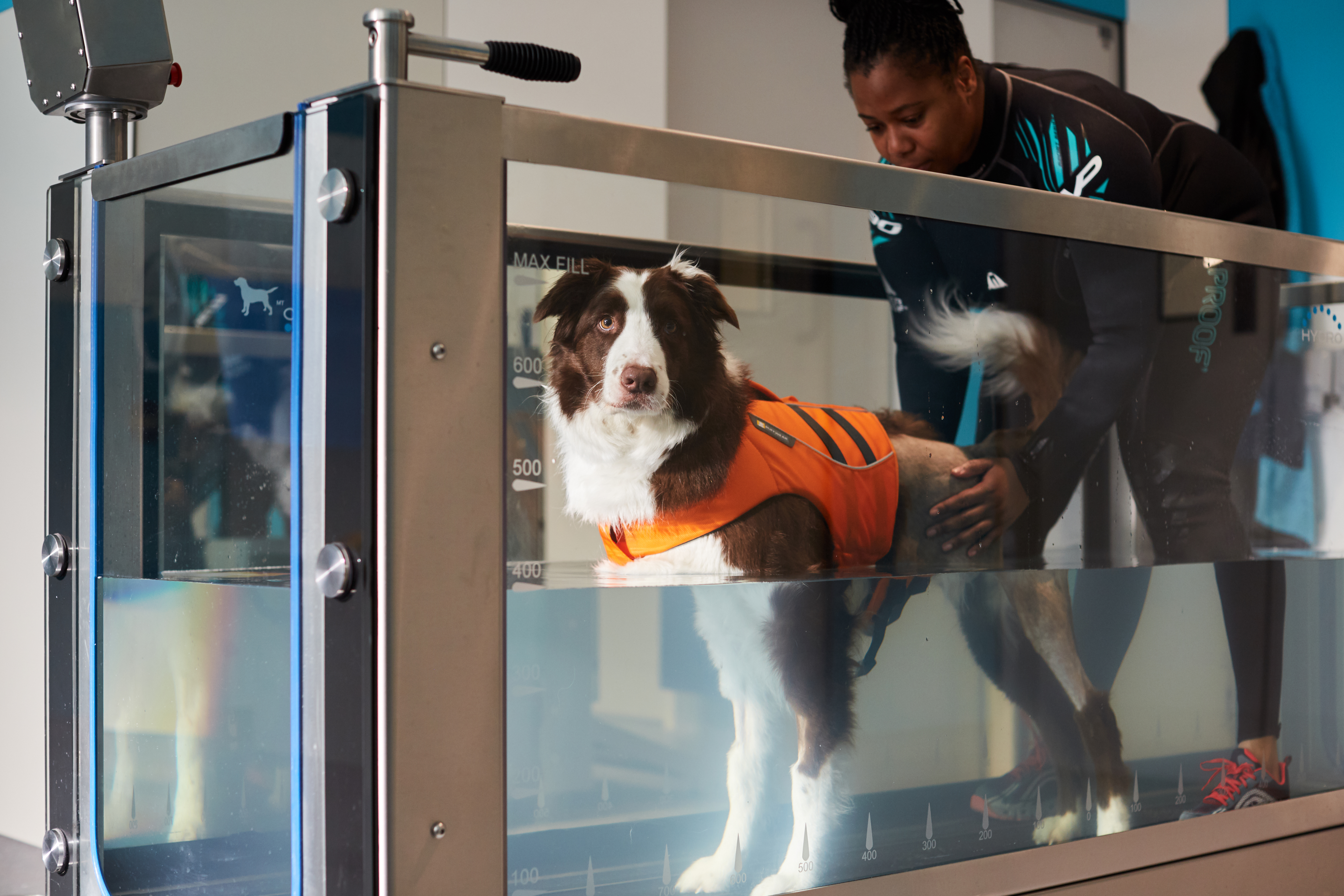 A dog and member of staff using the new hydrotherapy facilities