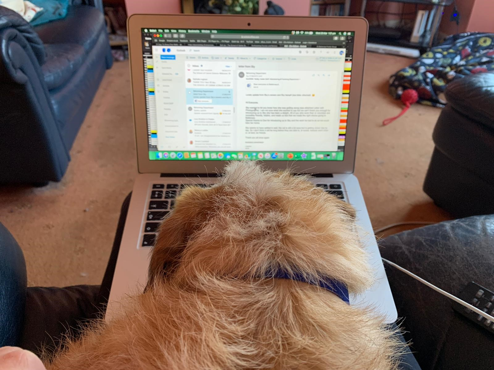 Brisco the dog helping Ella read her emails on her laptop