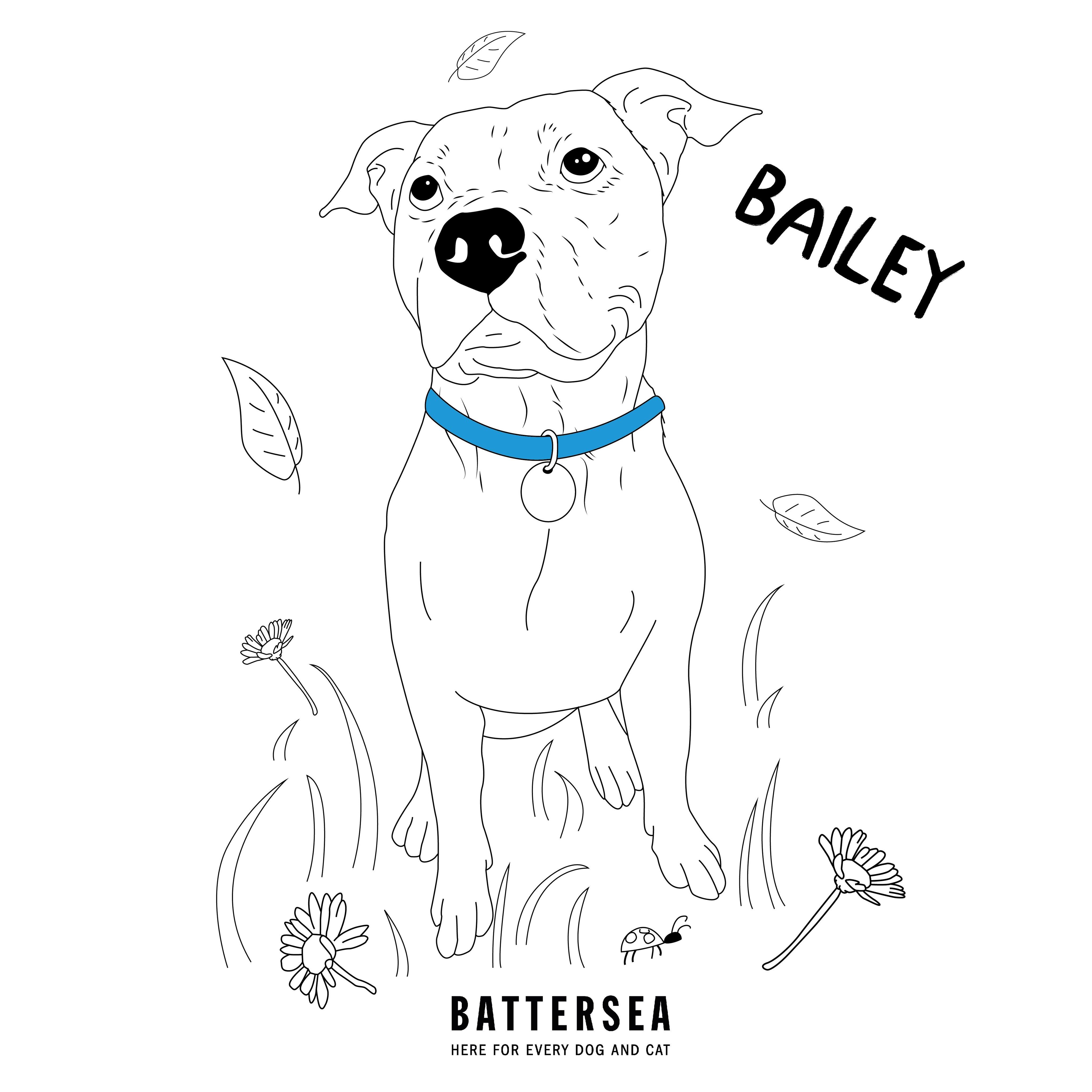 Bailey colouring sheet