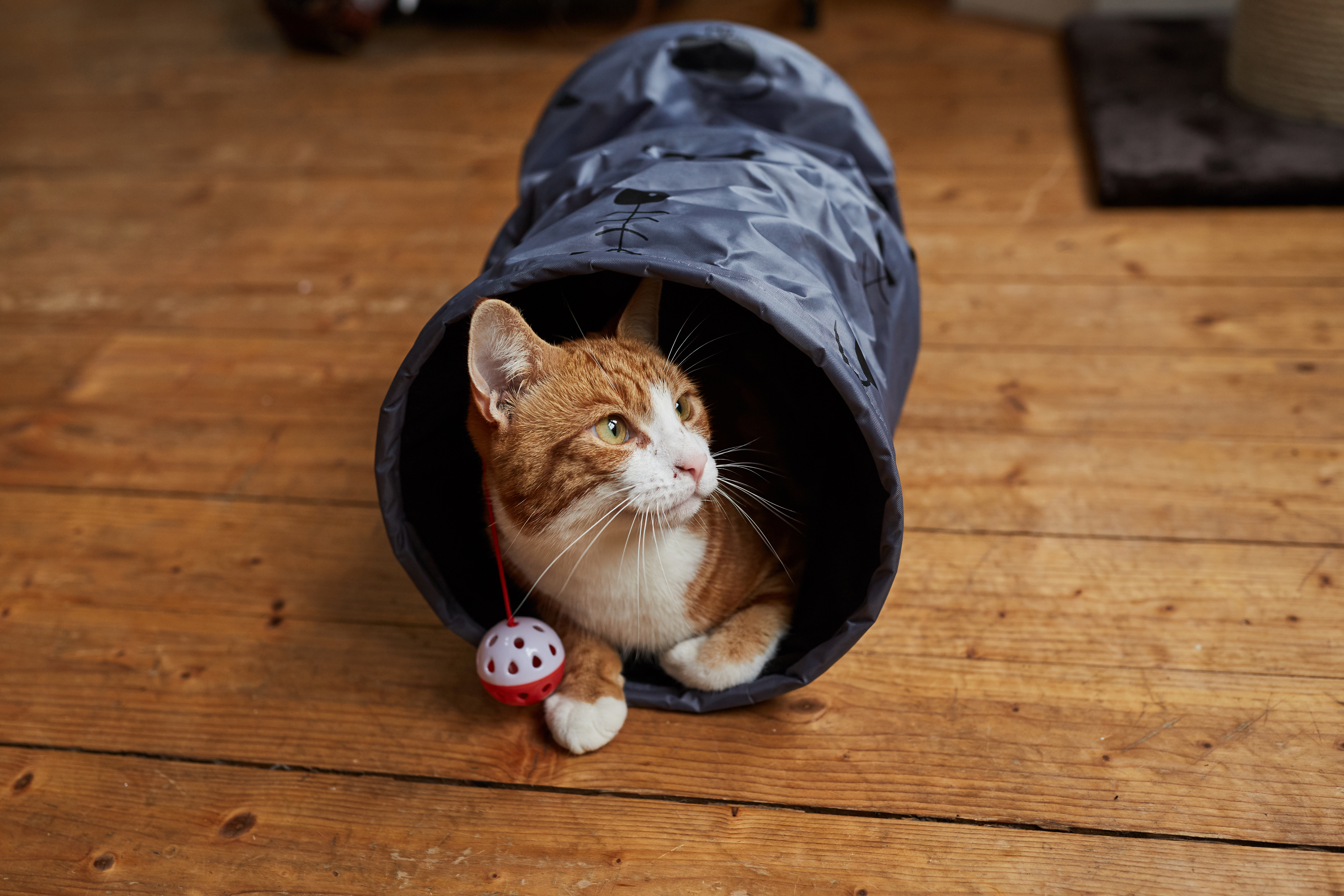 Make your house enriching for your cat