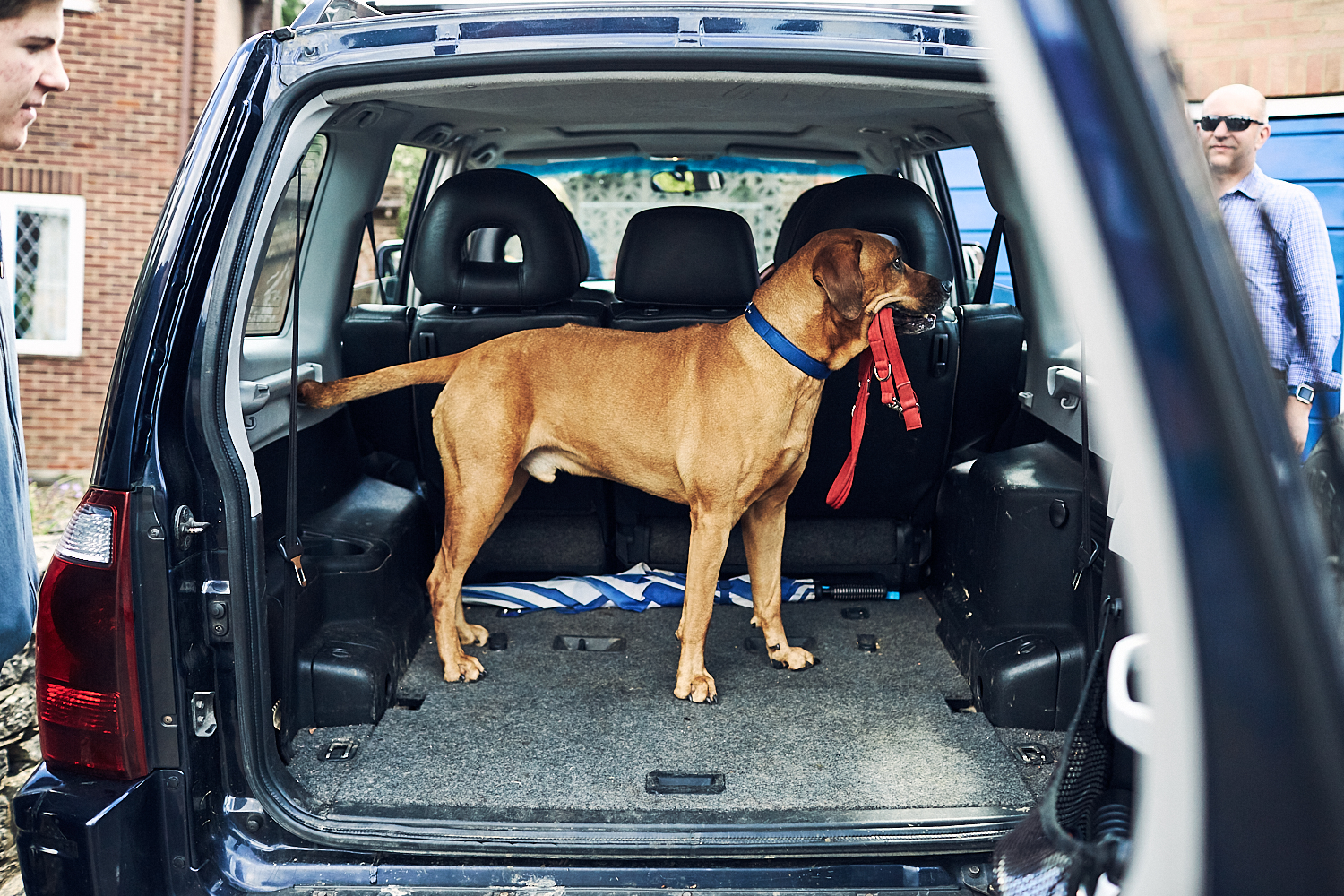 Photo of a dog ready to travel in a car