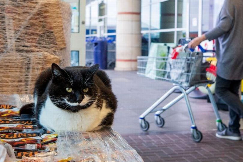 Spartucus the Tesco cat, sitting outside his local Tesco